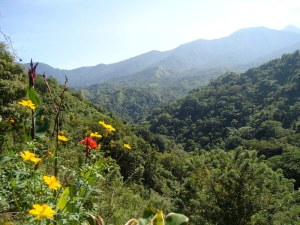Organic farm of Crape Diem right in this beautiful valley