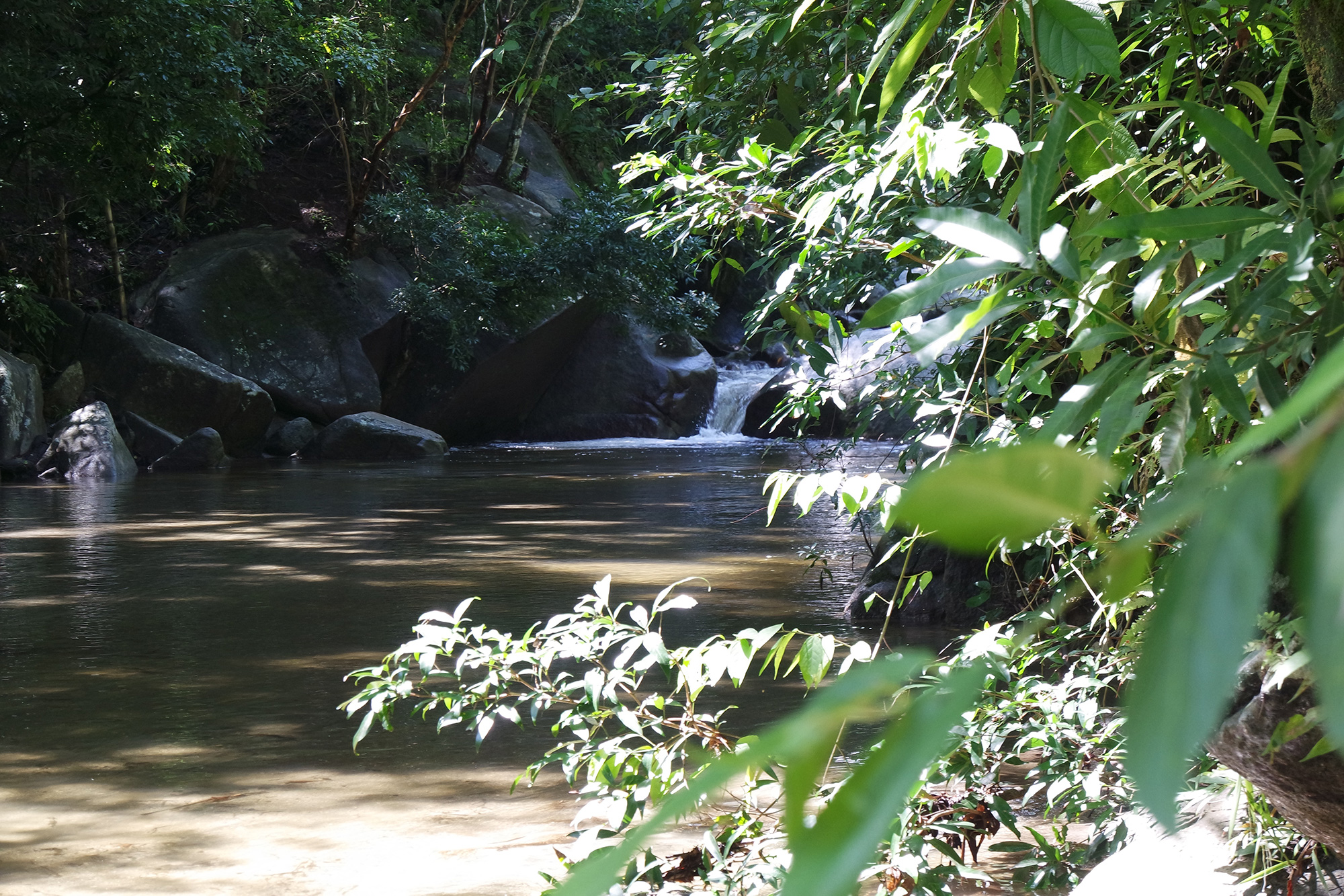 Swimming Spot of Paso del Mango