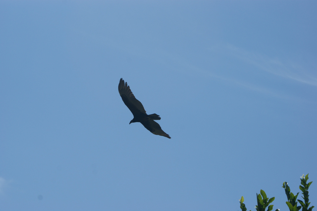 Bird flying above finca carpe diem nature reserve in Colombia