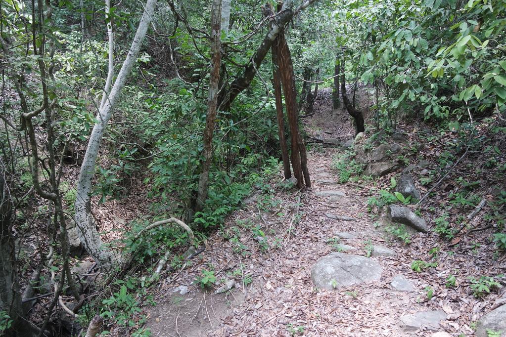 Path to the Mini Ciudad Perdida