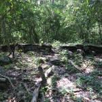 Tayrona ruins on the way to the Mini Cuidad Perdida