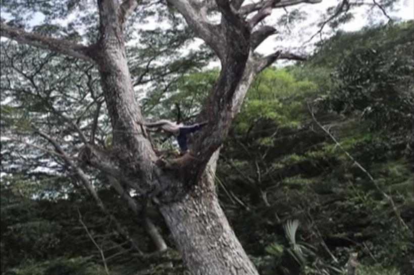 Wood master of Santa Marta