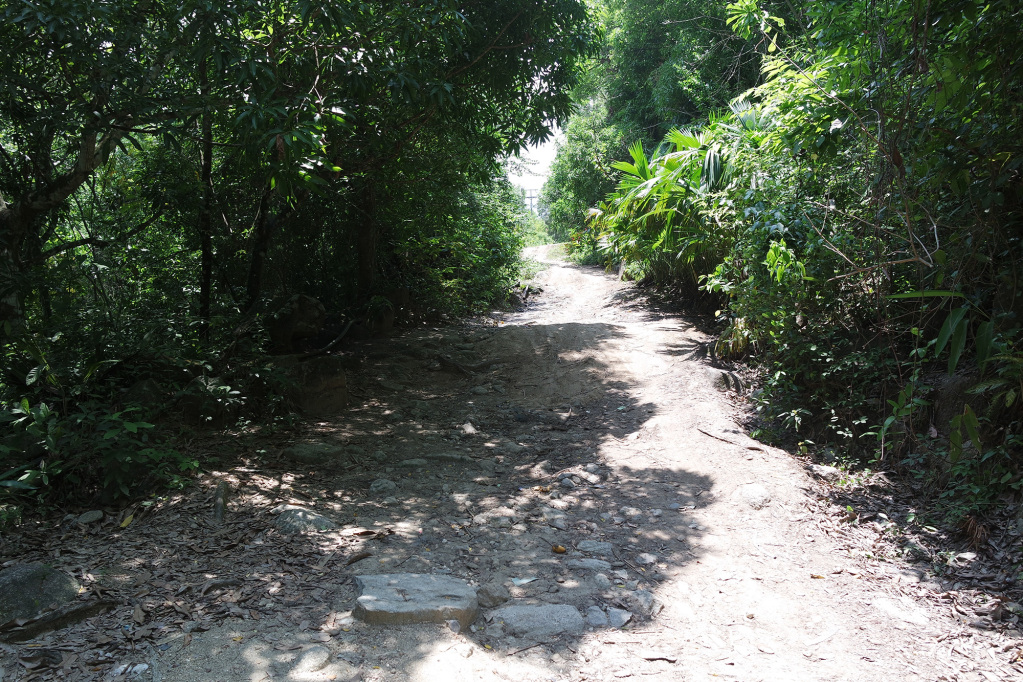 Road in Paso del Mango